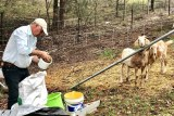 John feeding his goats